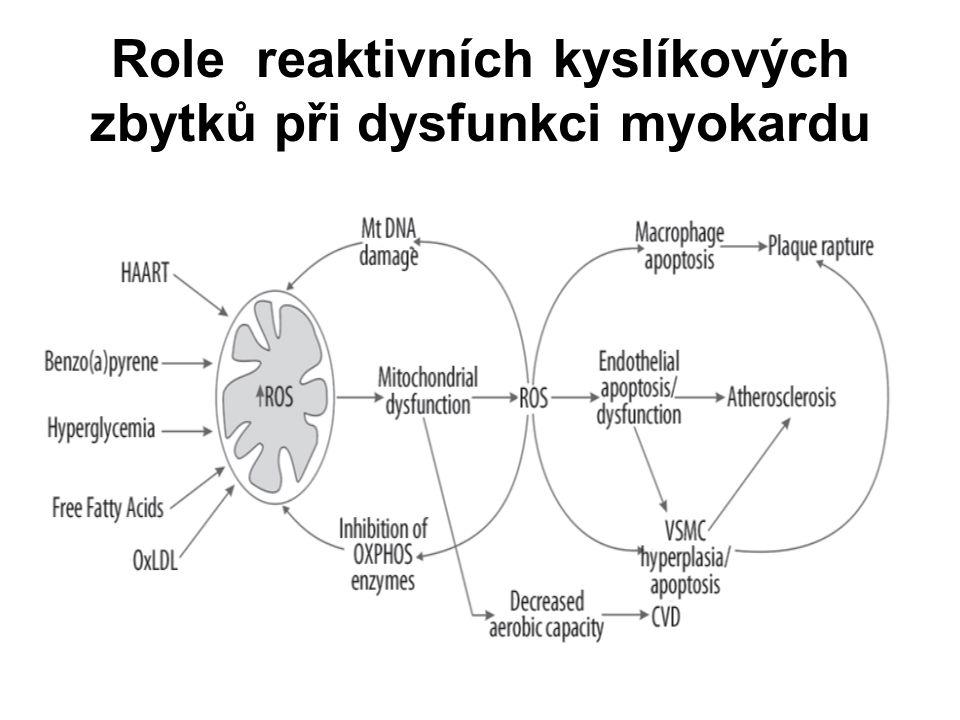 Role reaktivních kyslíkových zbytků při dysfunkci myokardu