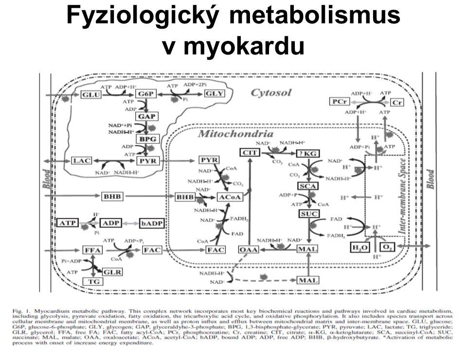 Fyziologický metabolismus v myokardu
