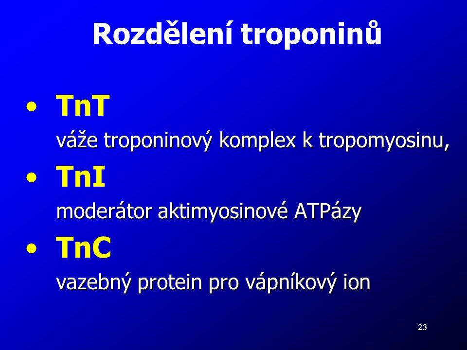 23 TnT váže troponinový komplex k tropomyosinu, TnI moderátor aktimyosinové ATPázy TnC vazebný protein pro vápníkový ion Rozdělení troponinů