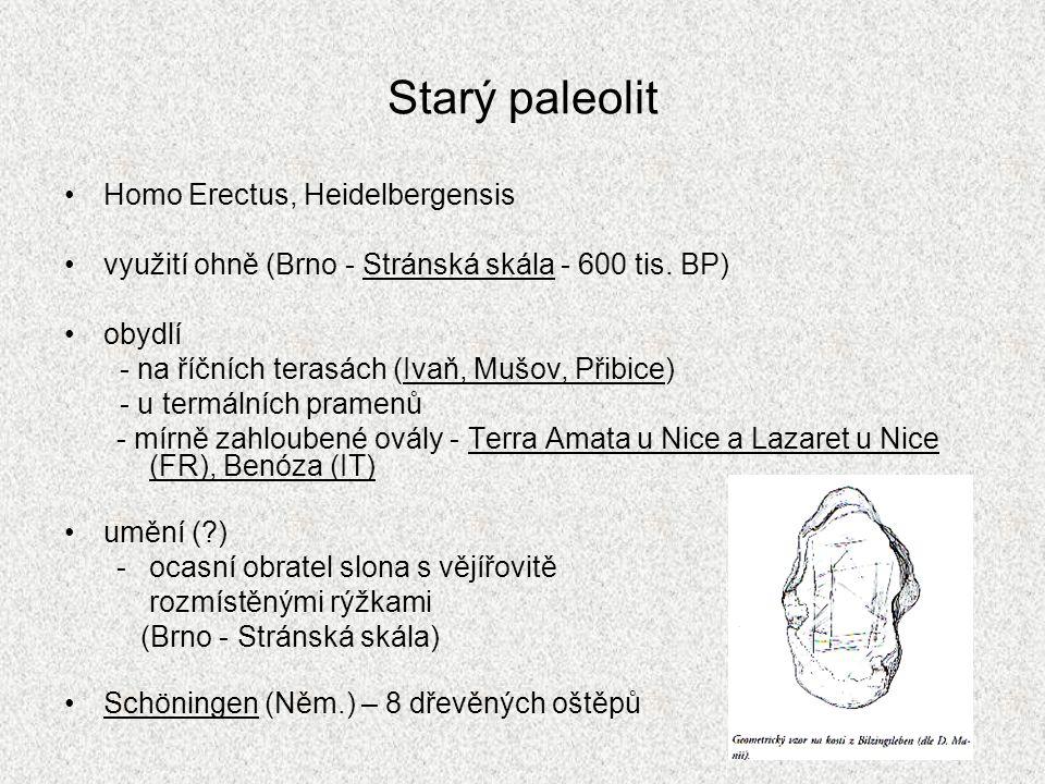 Starý paleolit Homo Erectus, Heidelbergensis využití ohně (Brno - Stránská skála - 600 tis. BP) obydlí - na říčních terasách (Ivaň, Mušov, Přibice) -