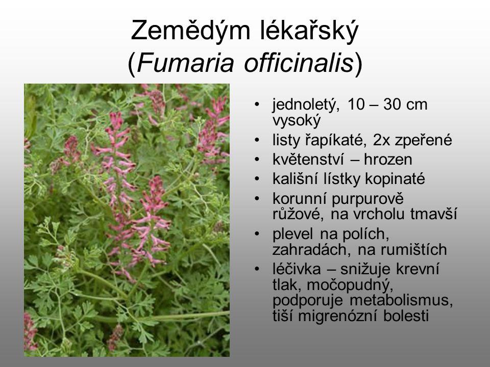Zemědým lékařský (Fumaria officinalis) jednoletý, 10 – 30 cm vysoký listy řapíkaté, 2x zpeřené květenství – hrozen kališní lístky kopinaté korunní pur