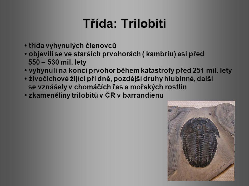 Třída: Trilobiti třída vyhynulých členovců objevili se ve starších prvohorách ( kambriu) asi před 550 – 530 mil. lety vyhynuli na konci prvohor během