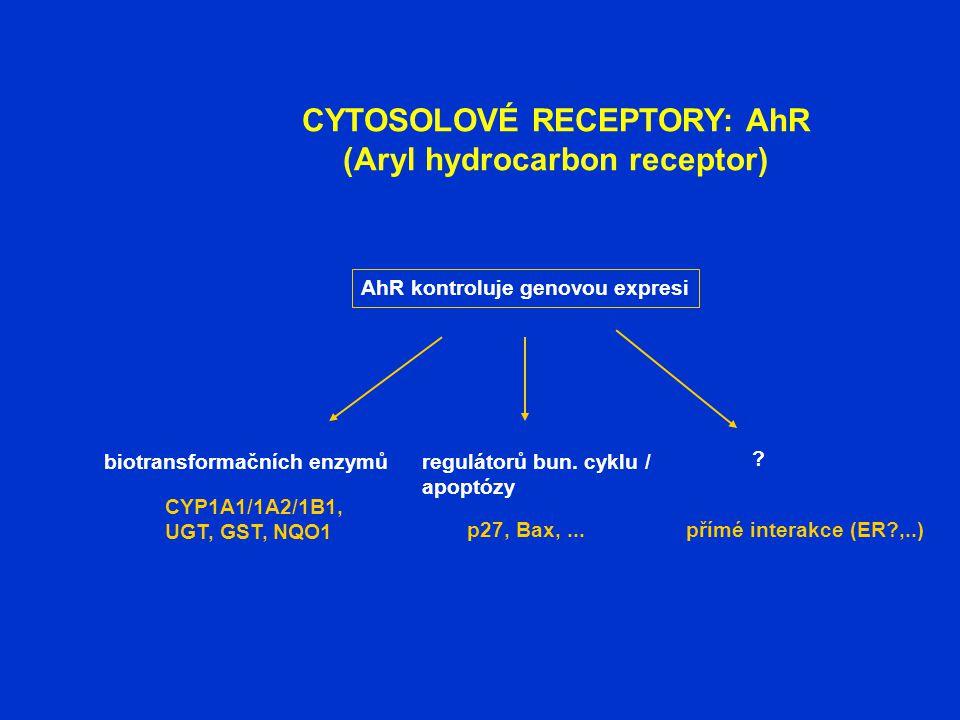 CYTOSOLOVÉ RECEPTORY: AhR (Aryl hydrocarbon receptor) CYP1A1/1A2/1B1, UGT, GST, NQO1 p27, Bax,...přímé interakce (ER?,..) AhR kontroluje genovou expre