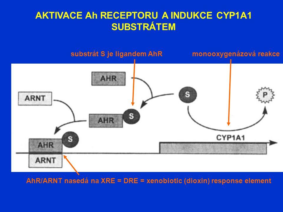 AKTIVACE Ah RECEPTORU A INDUKCE CYP1A1 SUBSTRÁTEM AhR/ARNT nasedá na XRE = DRE = xenobiotic (dioxin) response element substrát S je ligandem AhRmonoox