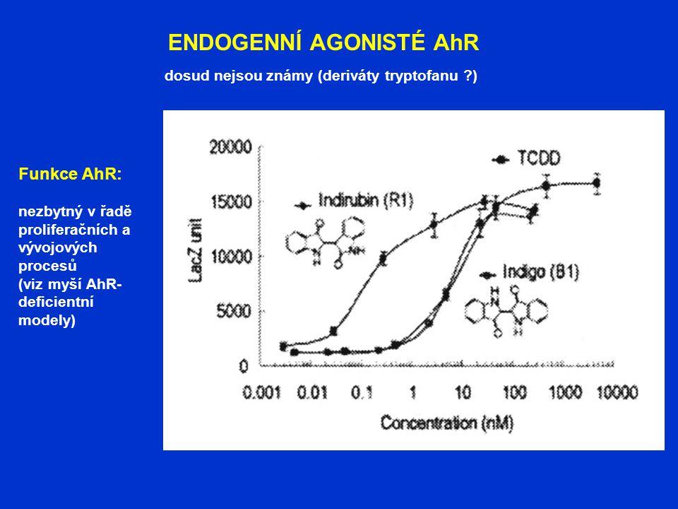 ENDOGENNÍ AGONISTÉ AhR dosud nejsou známy (deriváty tryptofanu ?) Funkce AhR: nezbytný v řadě proliferačních a vývojových procesů (viz myší AhR- defic
