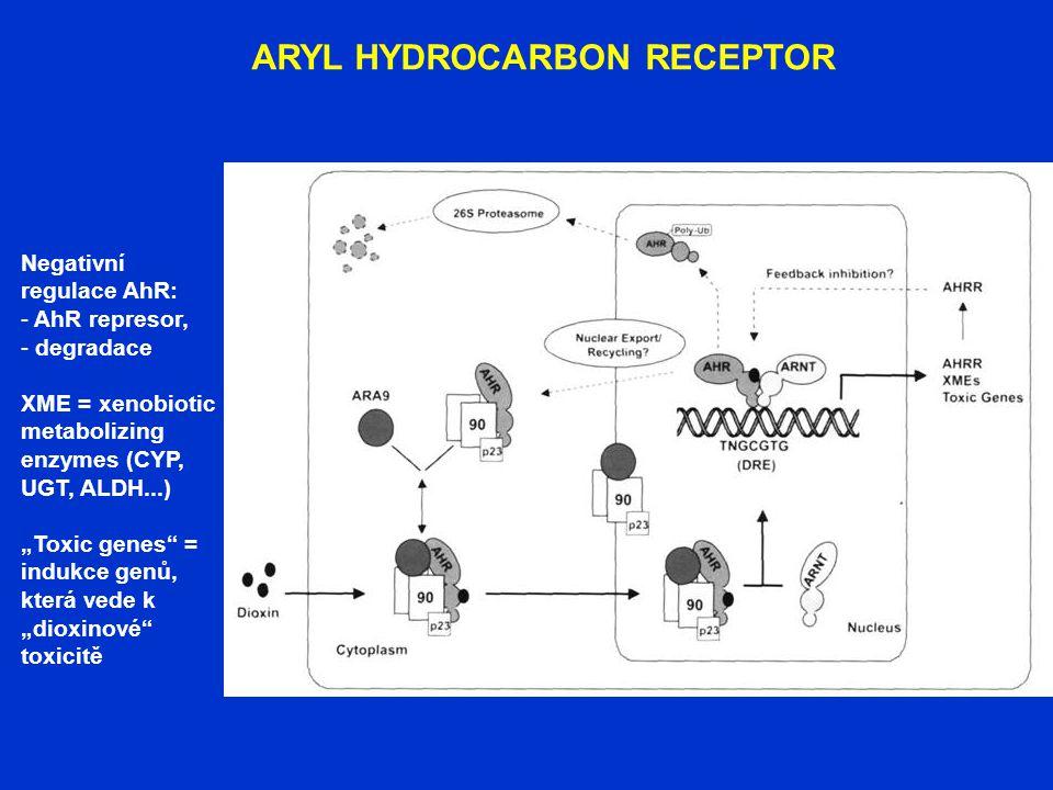 """ARYL HYDROCARBON RECEPTOR Negativní regulace AhR: - AhR represor, - degradace XME = xenobiotic metabolizing enzymes (CYP, UGT, ALDH...) """"Toxic genes"""""""