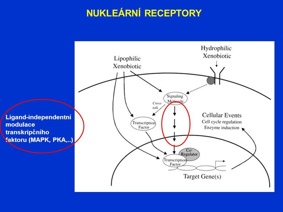 Ligand-independentní modulace transkripčního faktoru (MAPK, PKA,..)