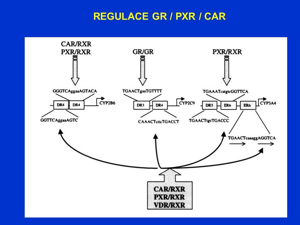 REGULACE GR / PXR / CAR