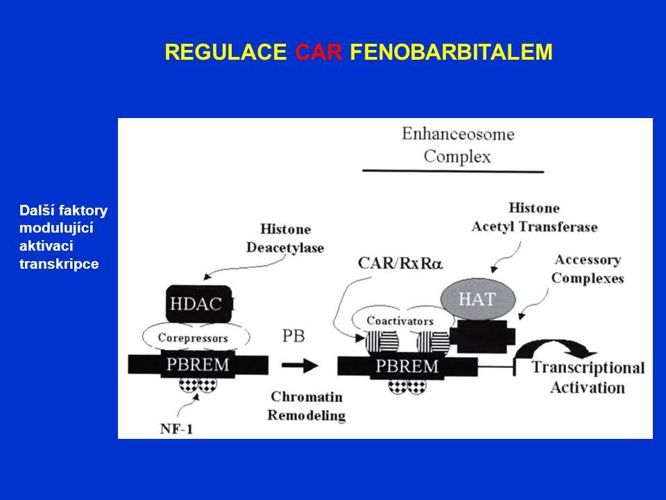 REGULACE CAR FENOBARBITALEM Další faktory modulující aktivaci transkripce