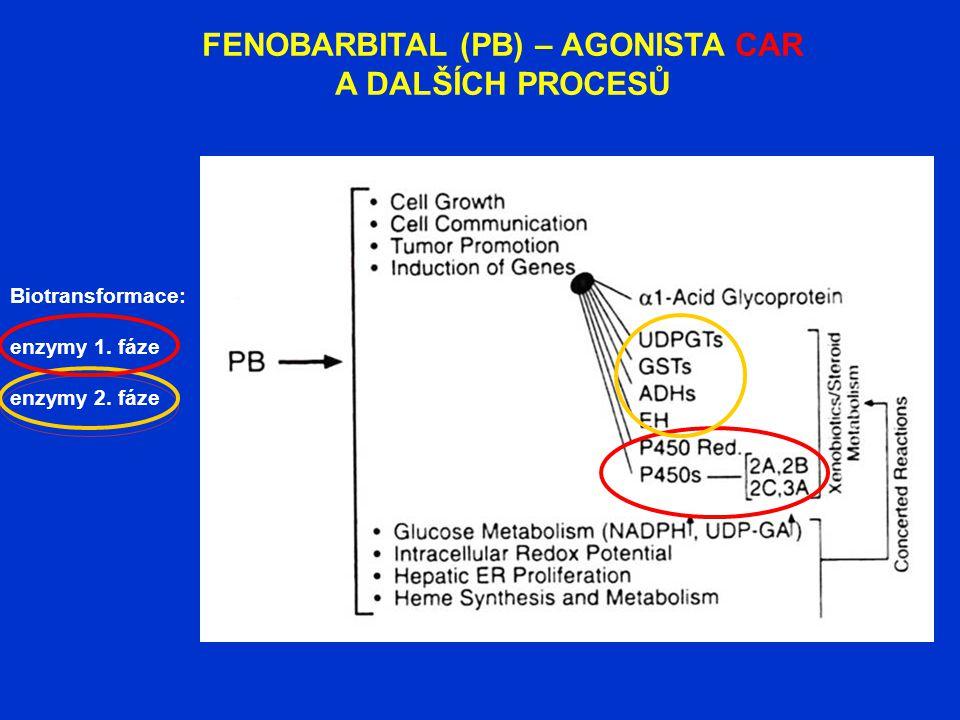 FENOBARBITAL (PB) – AGONISTA CAR A DALŠÍCH PROCESŮ Biotransformace: enzymy 1. fáze enzymy 2. fáze