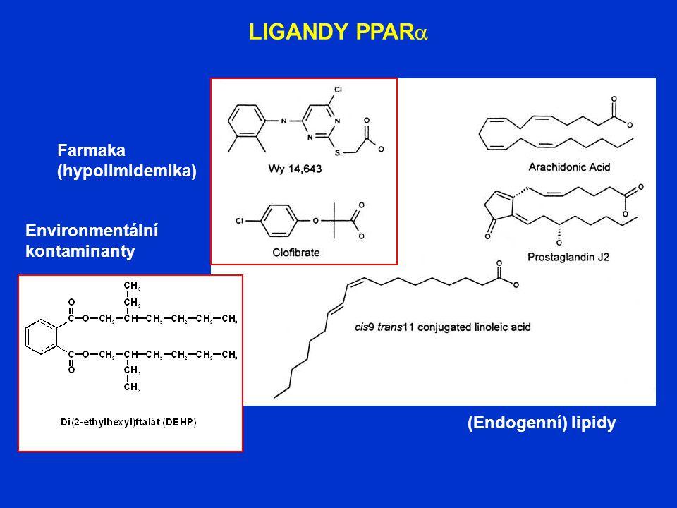 LIGANDY PPAR  Farmaka (hypolimidemika) Environmentální kontaminanty (Endogenní) lipidy