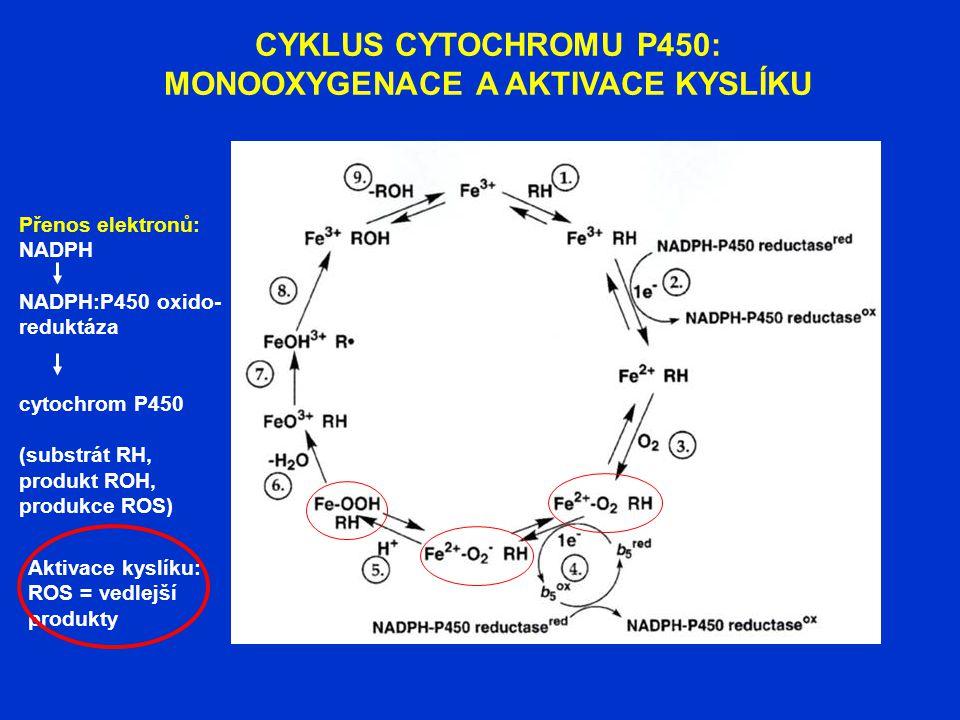 CYKLUS CYTOCHROMU P450: MONOOXYGENACE A AKTIVACE KYSLÍKU Přenos elektronů: NADPH NADPH:P450 oxido- reduktáza cytochrom P450 (substrát RH, produkt ROH,
