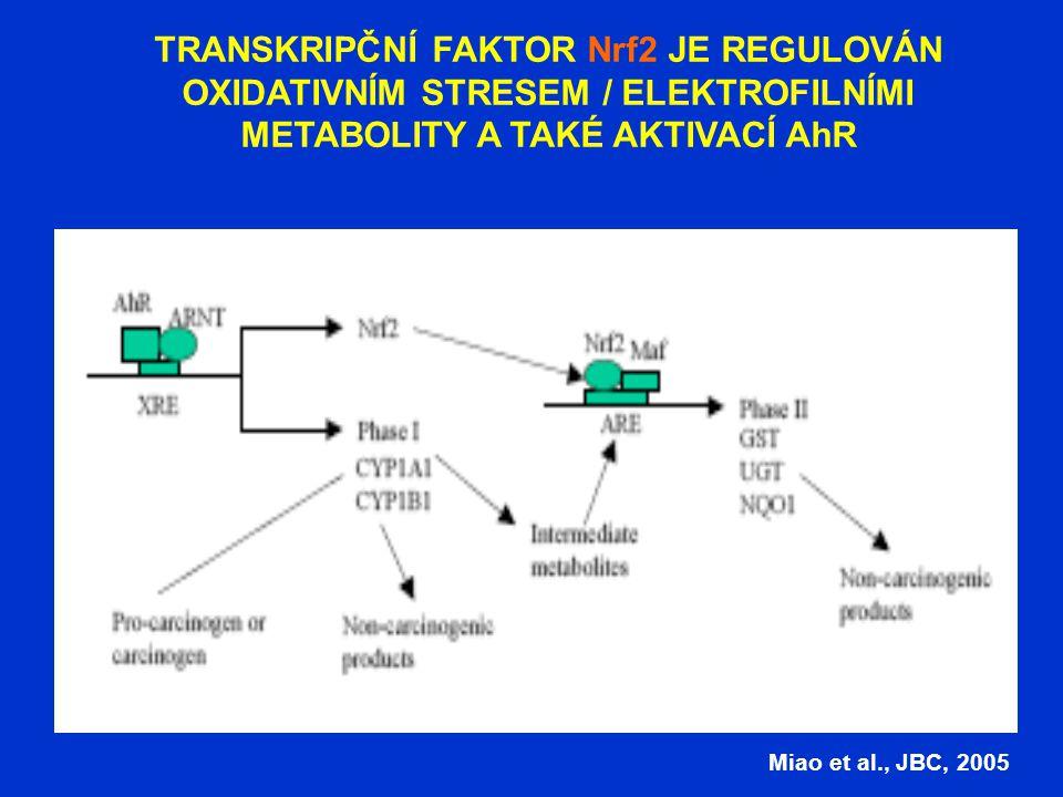 TRANSKRIPČNÍ FAKTOR Nrf2 JE REGULOVÁN OXIDATIVNÍM STRESEM / ELEKTROFILNÍMI METABOLITY A TAKÉ AKTIVACÍ AhR Miao et al., JBC, 2005