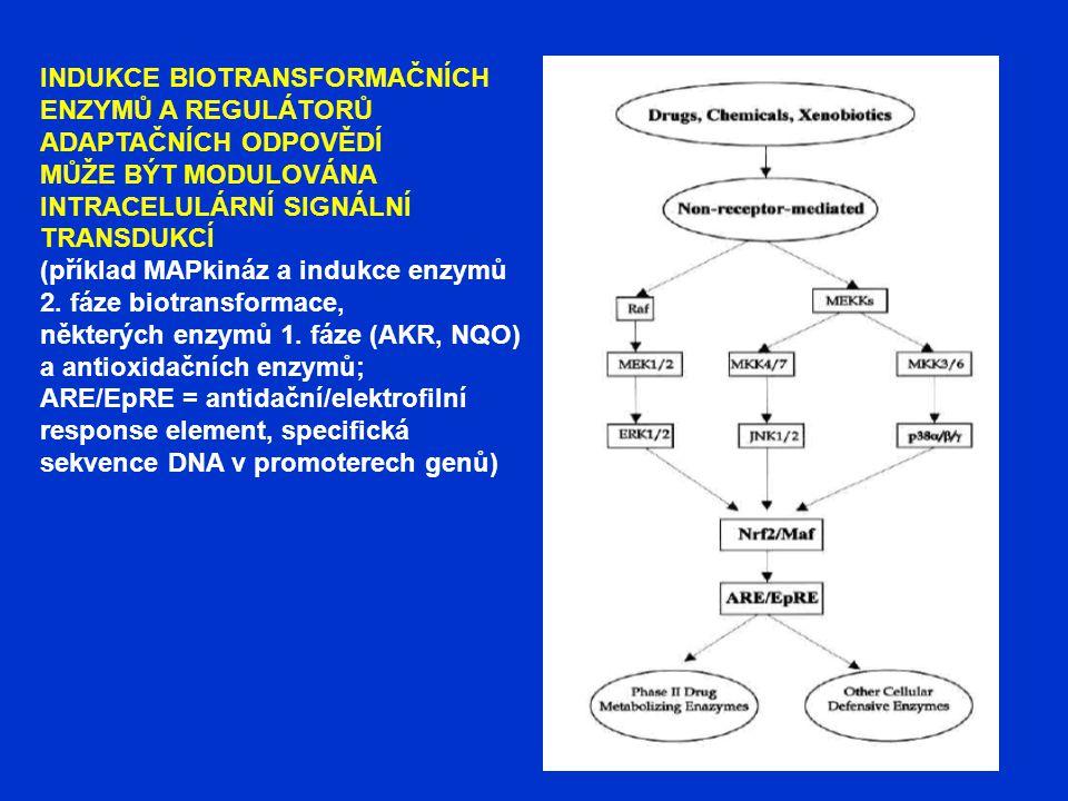 INDUKCE BIOTRANSFORMAČNÍCH ENZYMŮ A REGULÁTORŮ ADAPTAČNÍCH ODPOVĚDÍ MŮŽE BÝT MODULOVÁNA INTRACELULÁRNÍ SIGNÁLNÍ TRANSDUKCÍ (příklad MAPkináz a indukce