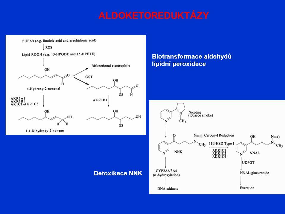ALDOKETOREDUKTÁZY Detoxikace NNK Biotransformace aldehydů lipidní peroxidace