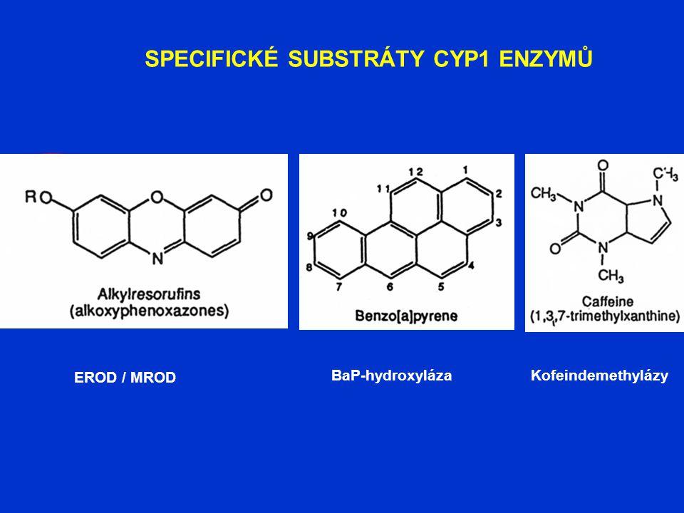 SPECIFICKÉ SUBSTRÁTY CYP1 ENZYMŮ EROD / MROD BaP-hydroxylázaKofeindemethylázy
