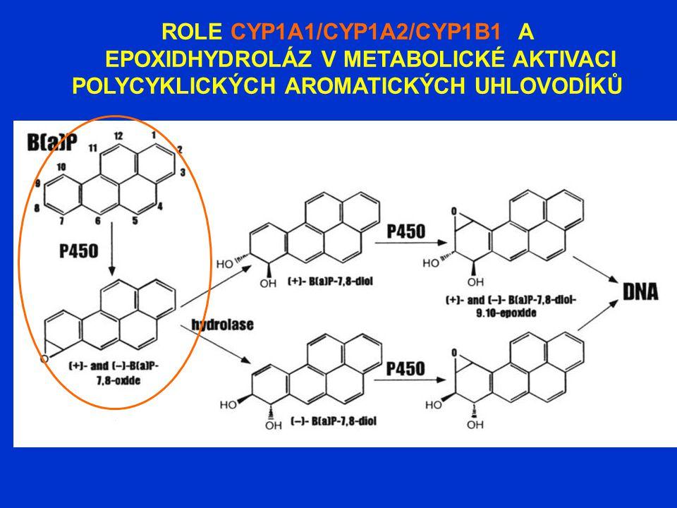 ROLE CYP1A1/CYP1A2/CYP1B1 A EPOXIDHYDROLÁZ V METABOLICKÉ AKTIVACI POLYCYKLICKÝCH AROMATICKÝCH UHLOVODÍKŮ