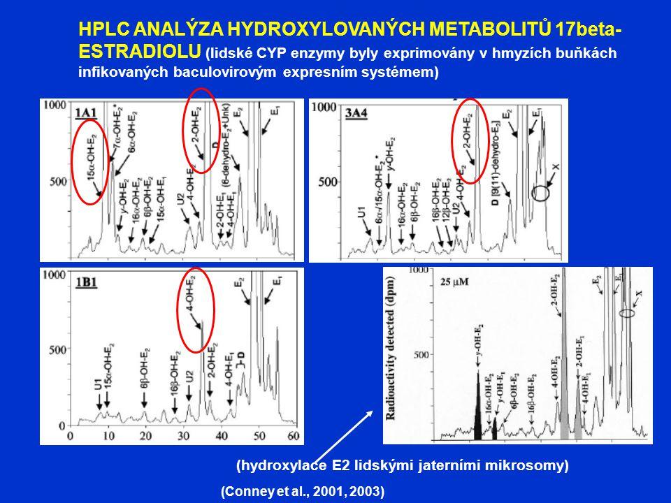 HPLC ANALÝZA HYDROXYLOVANÝCH METABOLITŮ 17beta- ESTRADIOLU (lidské CYP enzymy byly exprimovány v hmyzích buňkách infikovaných baculovirovým expresním