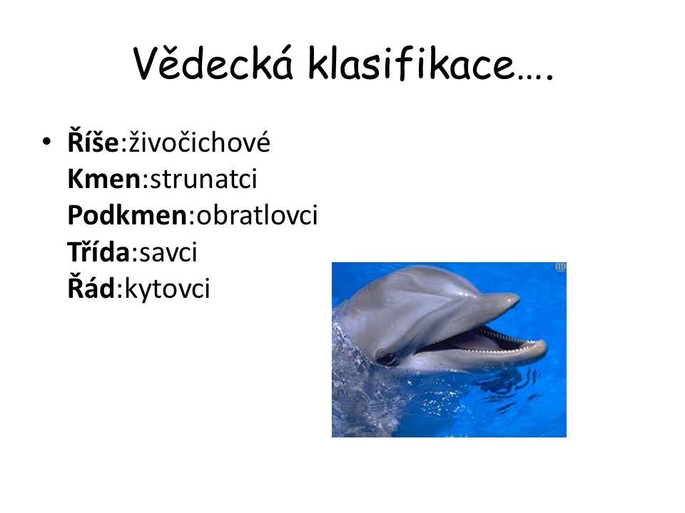 Charakteristika Kytovce je možné na základě vnější podobnosti mylně považovat za velké ryby; kytovci jsou však savci.
