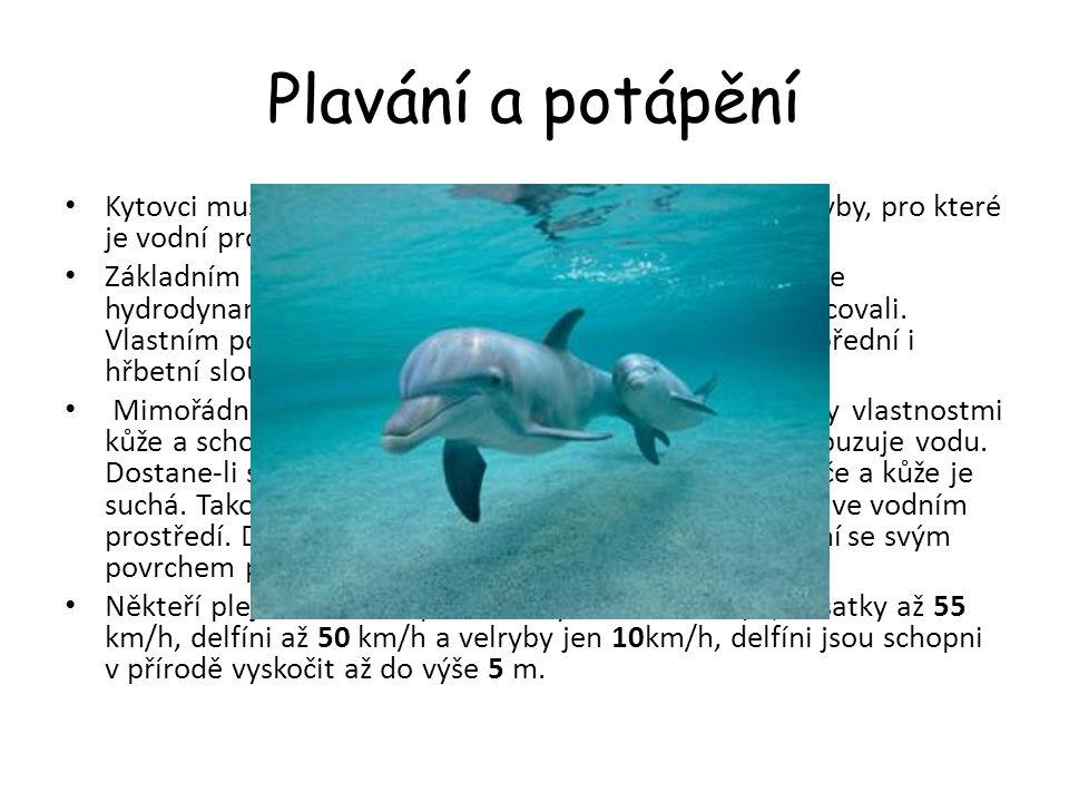 Plavání a potápění Kytovci musí při lovu plavat větší rychlostí než lovené ryby, pro které je vodní prostředí vlastní od samého počátku. Základním pož