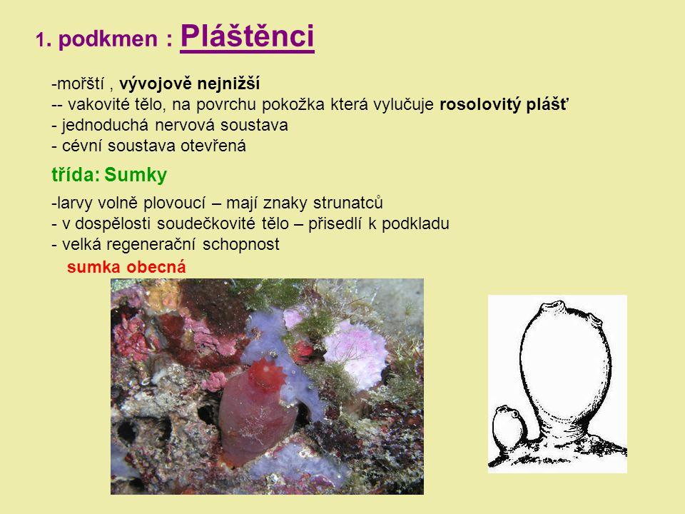 1. podkmen : Pláštěnci -mořští, vývojově nejnižší -- vakovité tělo, na povrchu pokožka která vylučuje rosolovitý plášť - jednoduchá nervová soustava -