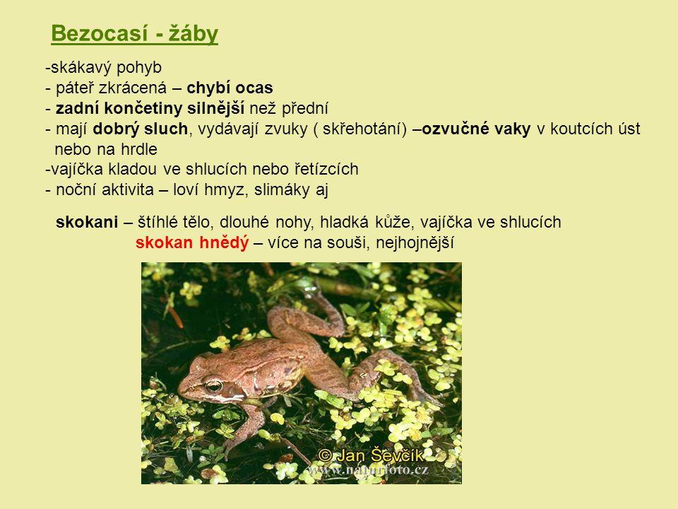 Bezocasí - žáby -skákavý pohyb - páteř zkrácená – chybí ocas - zadní končetiny silnější než přední - mají dobrý sluch, vydávají zvuky ( skřehotání) –o