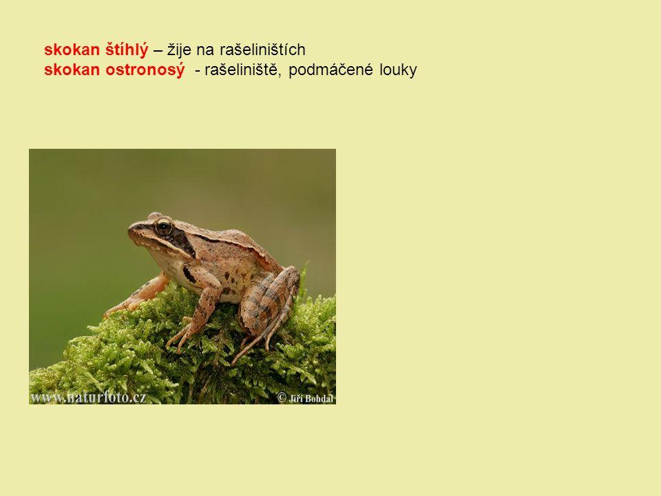 skokan štíhlý – žije na rašeliništích skokan ostronosý - rašeliniště, podmáčené louky