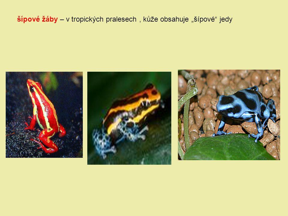 "šípové žáby – v tropických pralesech, kůže obsahuje ""šípové"" jedy"