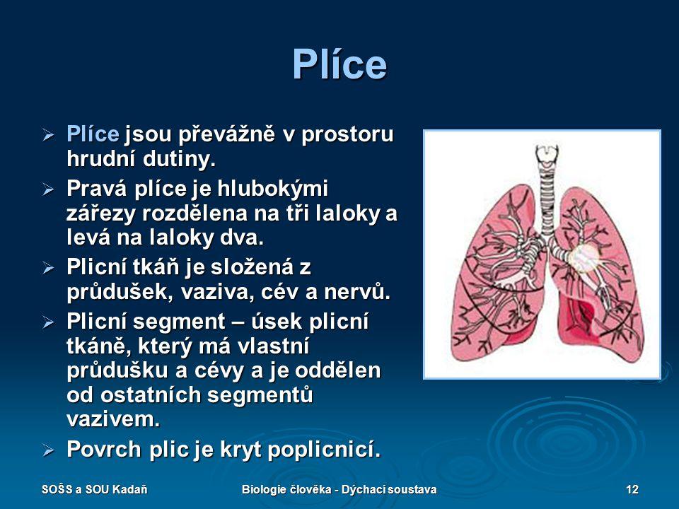 SOŠS a SOU KadaňBiologie člověka - Dýchací soustava12 Plíce  Plíce jsou převážně v prostoru hrudní dutiny.  Pravá plíce je hlubokými zářezy rozdělen