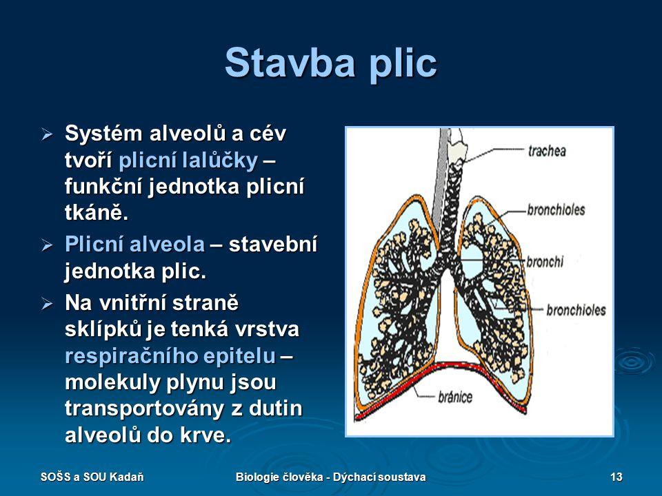 SOŠS a SOU KadaňBiologie člověka - Dýchací soustava13 Stavba plic  Systém alveolů a cév tvoří plicní lalůčky – funkční jednotka plicní tkáně.  Plicn
