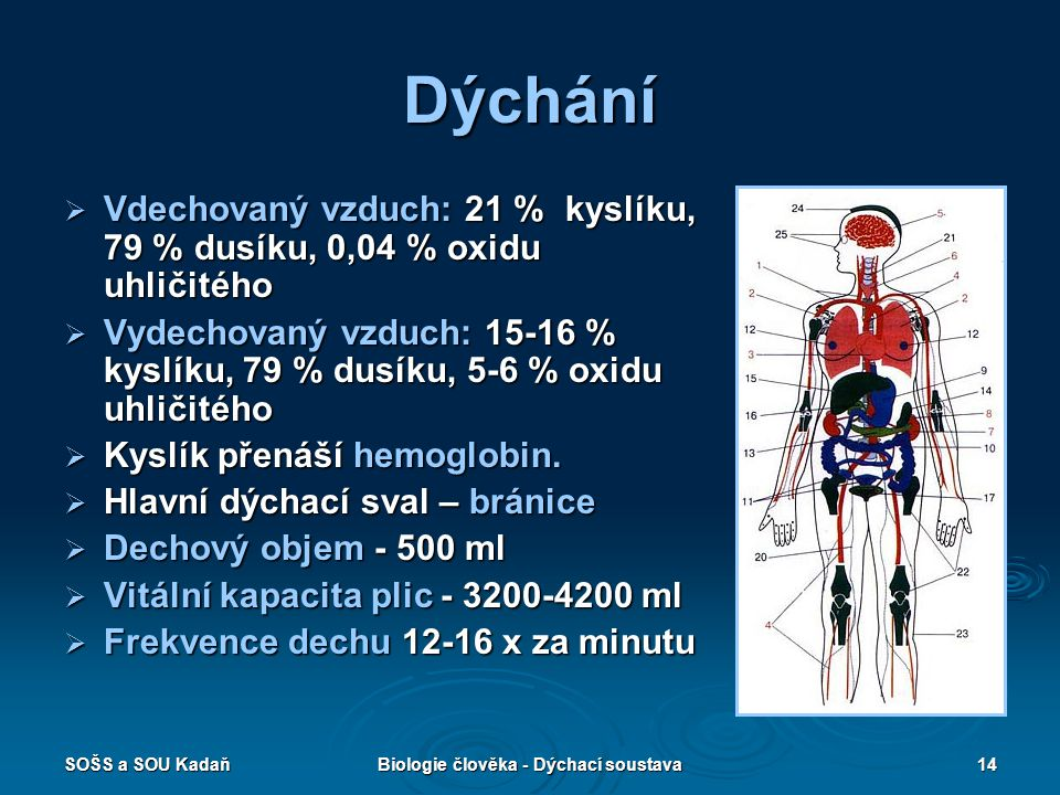SOŠS a SOU KadaňBiologie člověka - Dýchací soustava14 Dýchání  Vdechovaný vzduch: 21 % kyslíku, 79 % dusíku, 0,04 % oxidu uhličitého  Vydechovaný vz