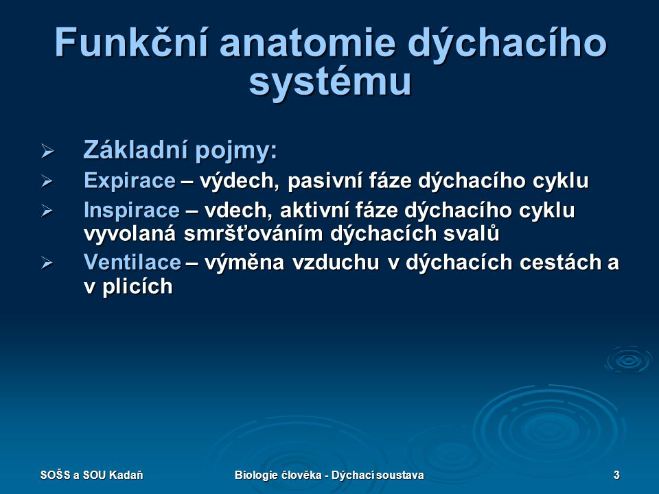 SOŠS a SOU KadaňBiologie člověka - Dýchací soustava4 Funkční anatomie dýchacího systému  Základní pojmy:  Zevní dýchání – výměna plynů mezi atmosférou a krví (plíce)  Toto je zajištěno dýchacím systémem a to: 1.
