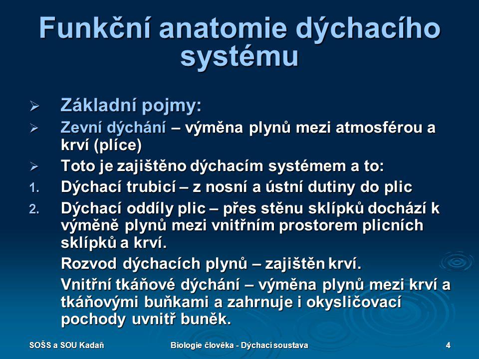 SOŠS a SOU KadaňBiologie člověka - Dýchací soustava4 Funkční anatomie dýchacího systému  Základní pojmy:  Zevní dýchání – výměna plynů mezi atmosfér