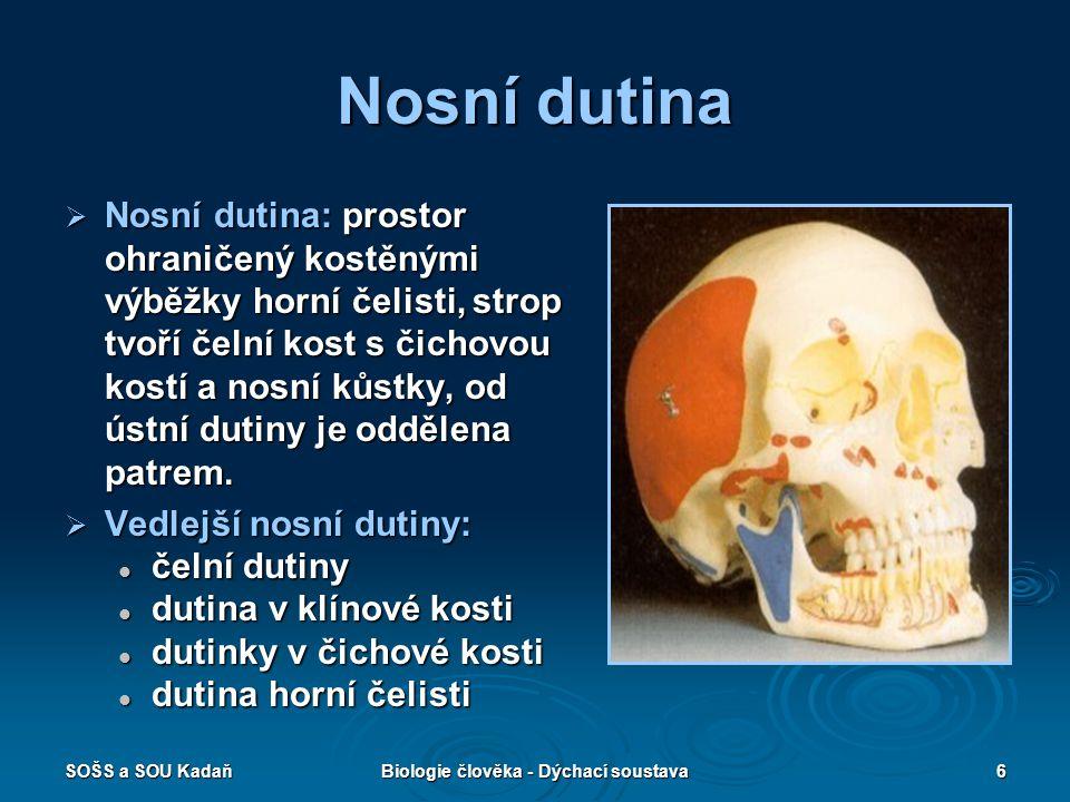 SOŠS a SOU KadaňBiologie člověka - Dýchací soustava6 Nosní dutina  Nosní dutina: prostor ohraničený kostěnými výběžky horní čelisti, strop tvoří čeln