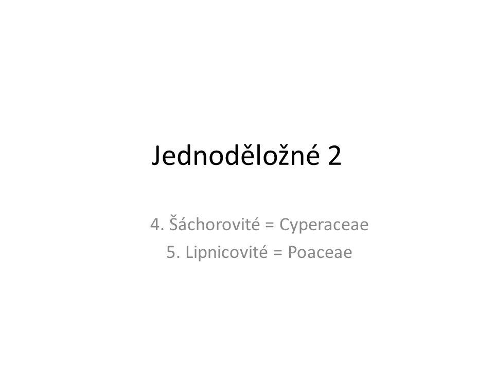Jednoděložné 2 4. Šáchorovité = Cyperaceae 5. Lipnicovité = Poaceae