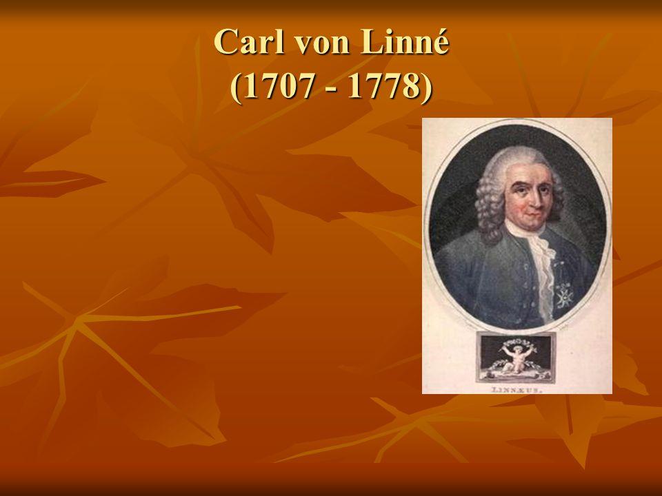 """Švédský botanik, tvůrce botanické taxonomie Švédský botanik, tvůrce botanické taxonomie O rostlinných druzích"""" v tomto zásadním díle popsal všechny tehdy známé organismy krátkou latinskou charakteristikou a označil je dvouslovnými názvy, tj."""