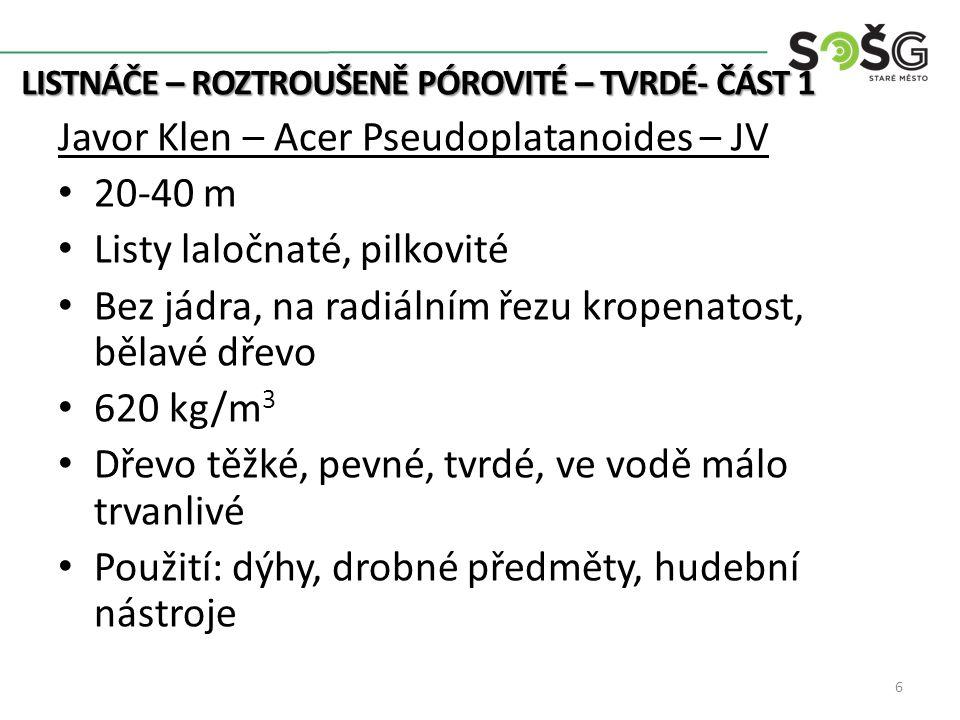 LISTNÁČE – ROZTROUŠENĚ PÓROVITÉ – TVRDÉ- ČÁST 1 7 http://botanika.wendys.cz/ prace-se-drevem.spibi.cz