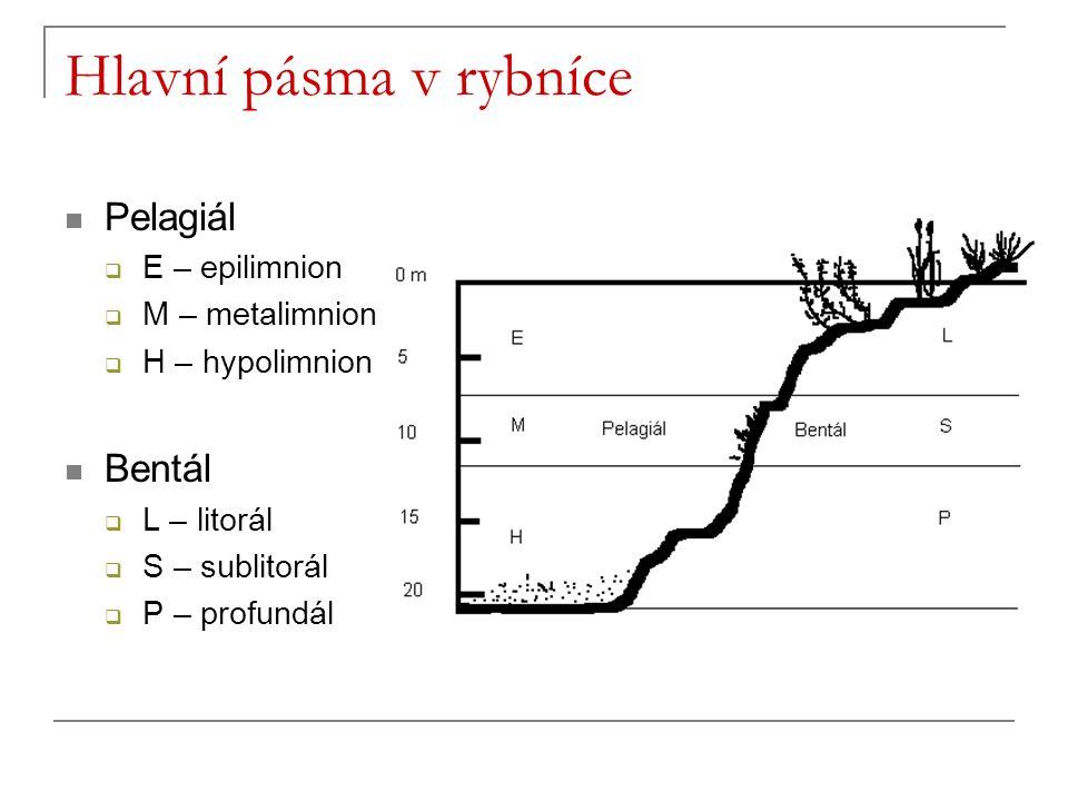 Hlavní pásma v rybníce Pelagiál  E – epilimnion  M – metalimnion  H – hypolimnion Bentál  L – litorál  S – sublitorál  P – profundál