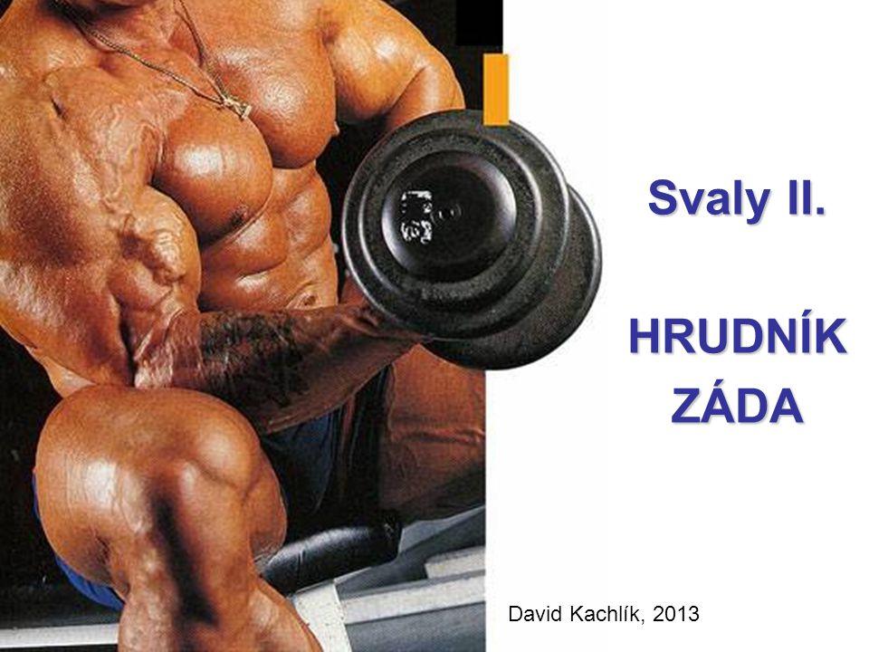 Svaly II. HRUDNÍKZÁDA David Kachlík, 2013