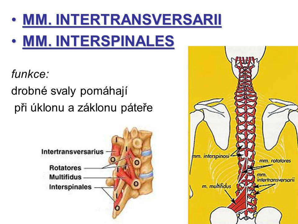 MM.INTERTRANSVERSARIIMM. INTERTRANSVERSARII MM. INTERSPINALESMM.