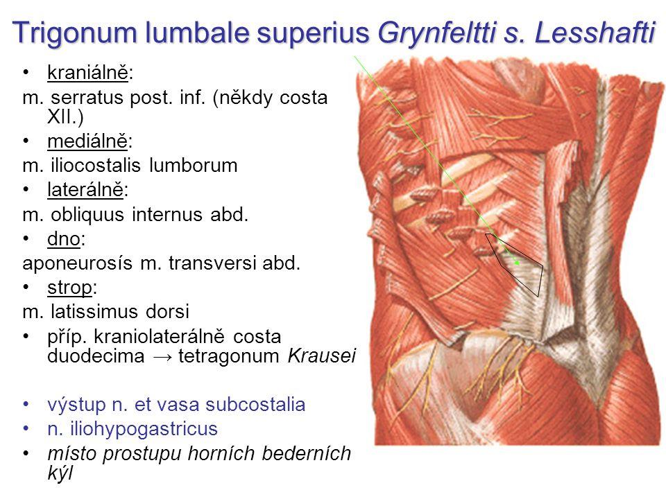 Trigonum lumbale superius Grynfeltti s.Lesshafti kraniálně: m.