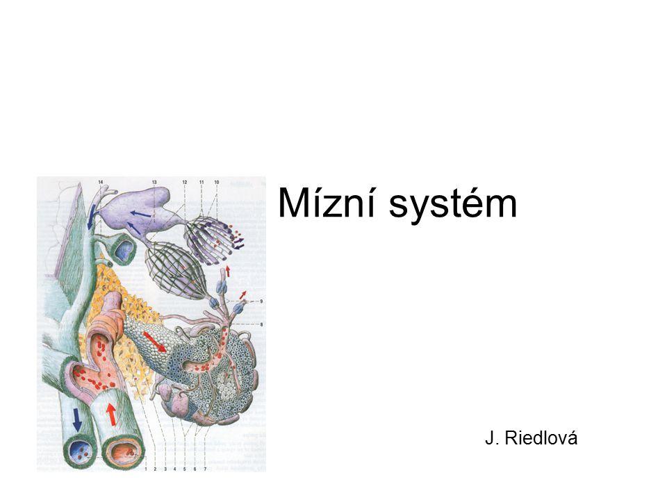 Mízní systém J. Riedlová