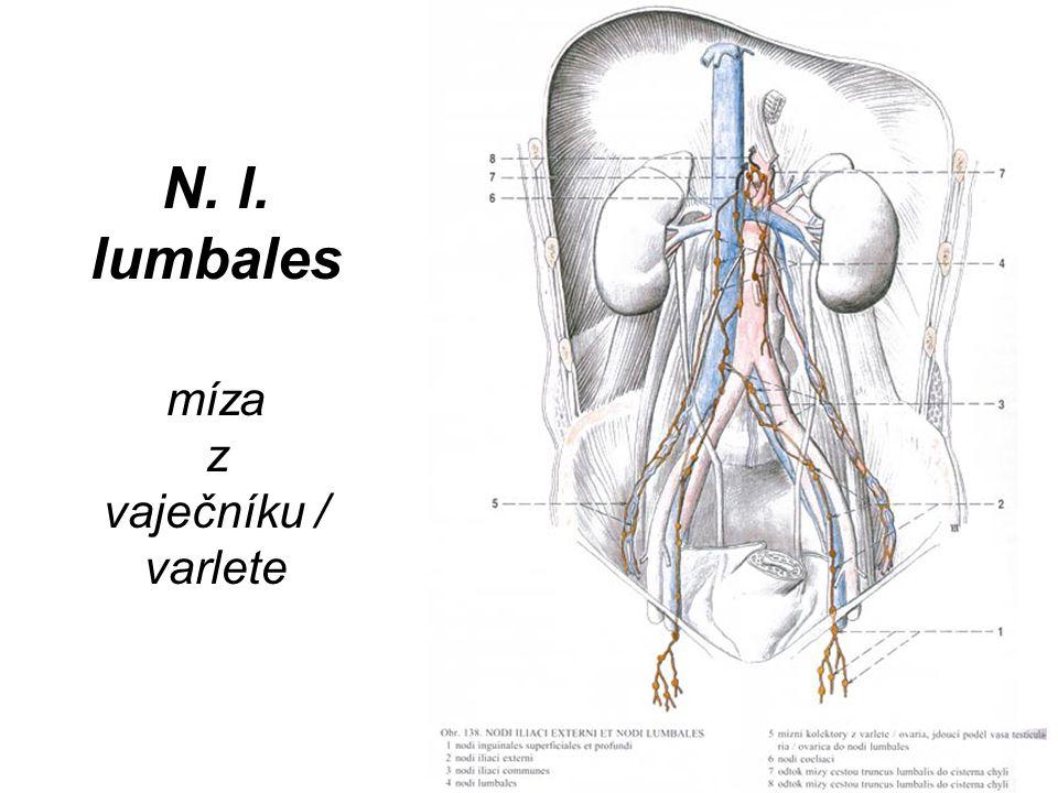 N. l. lumbales míza z vaječníku / varlete