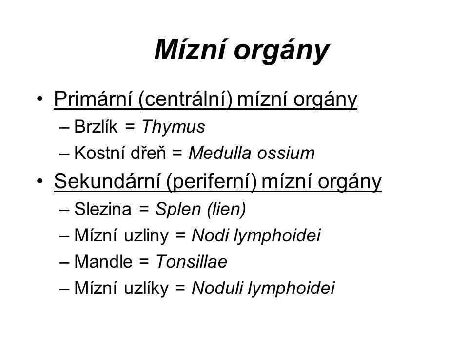 Mízní orgány Primární (centrální) mízní orgány –Brzlík = Thymus –Kostní dřeň = Medulla ossium Sekundární (periferní) mízní orgány –Slezina = Splen (li