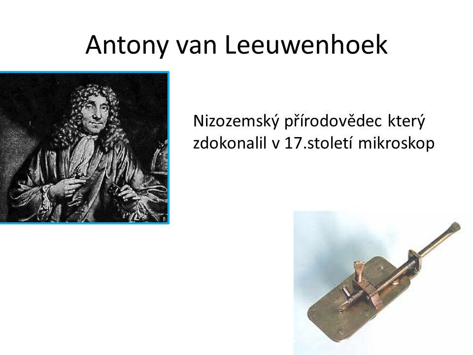 Antony van Leeuwenhoek Nizozemský přírodovědec který zdokonalil v 17.století mikroskop
