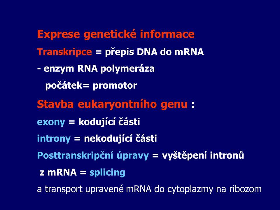 Exprese genetické informace Transkripce = přepis DNA do mRNA - enzym RNA polymeráza počátek= promotor Stavba eukaryontního genu : exony = kodující čás