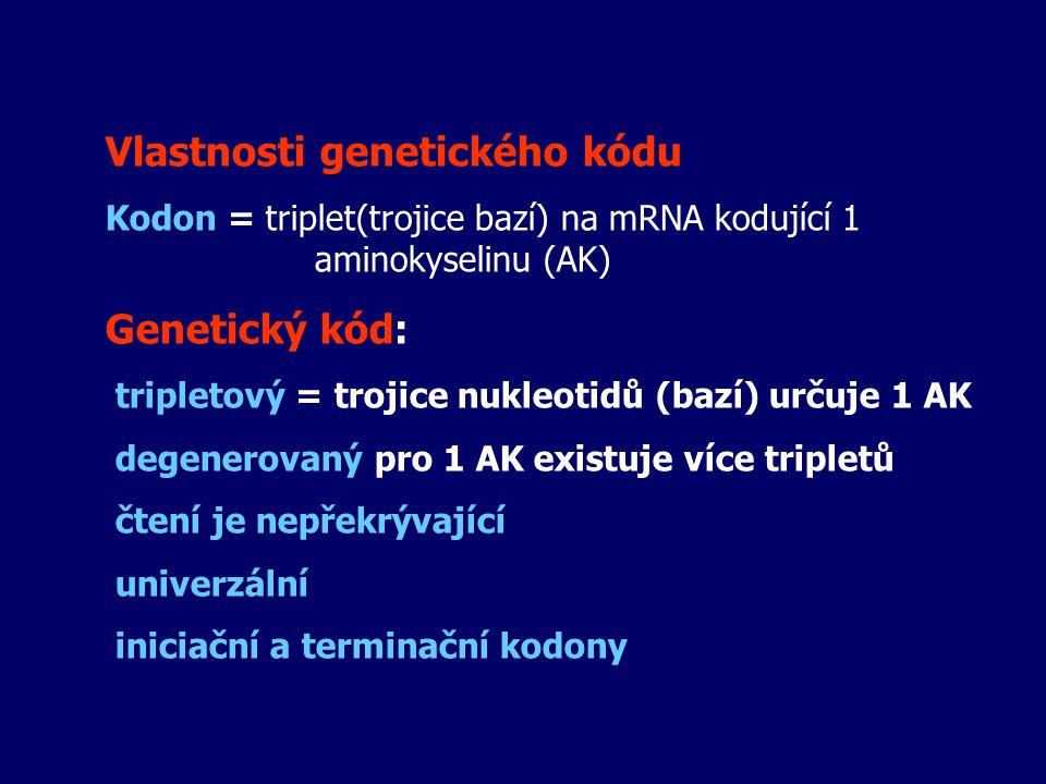 Vlastnosti genetického kódu Kodon = triplet(trojice bazí) na mRNA kodující 1 aminokyselinu (AK) Genetický kód: tripletový = trojice nukleotidů (bazí)