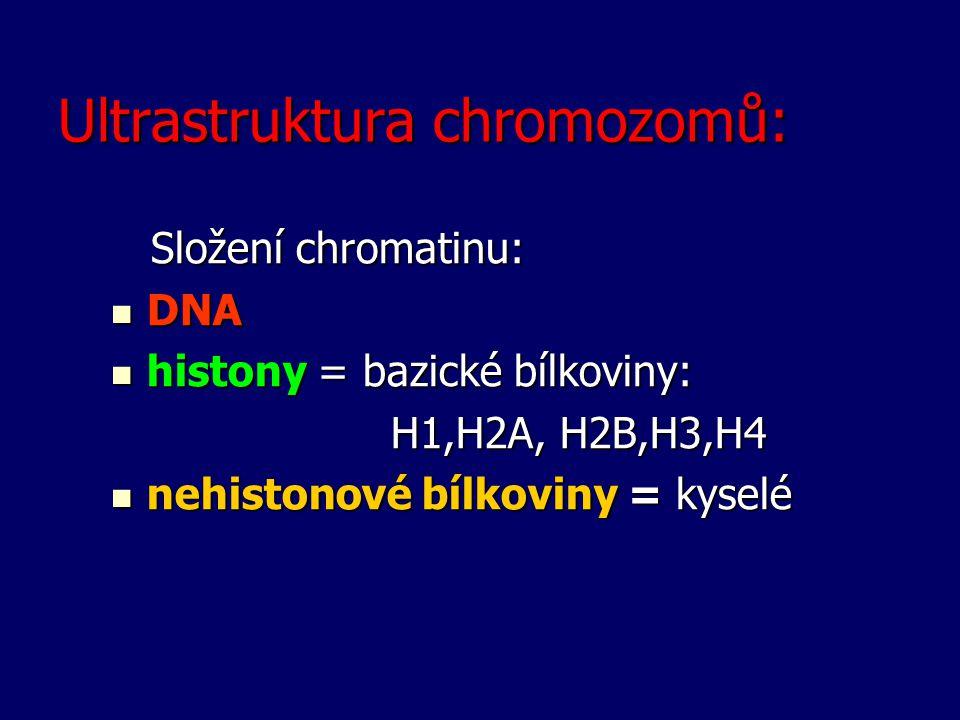 Ultrastruktura chromozomů: Složení chromatinu: Složení chromatinu: DNA DNA histony = bazické bílkoviny: histony = bazické bílkoviny: H1,H2A, H2B,H3,H4
