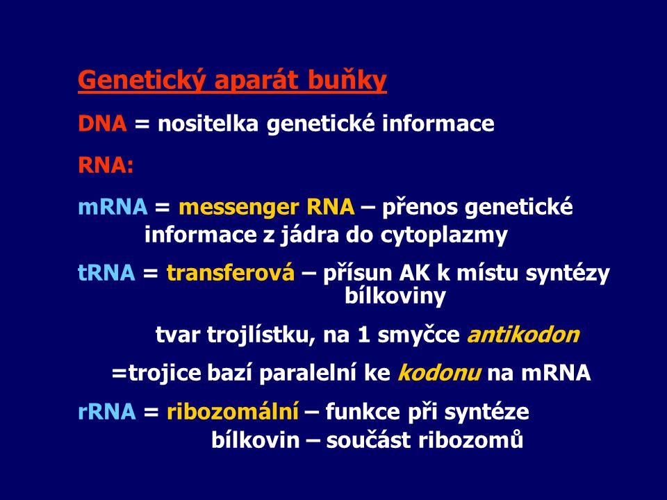 Genetický aparát buňky DNA = nositelka genetické informace RNA: mRNA = messenger RNA – přenos genetické informace z jádra do cytoplazmy tRNA = transfe