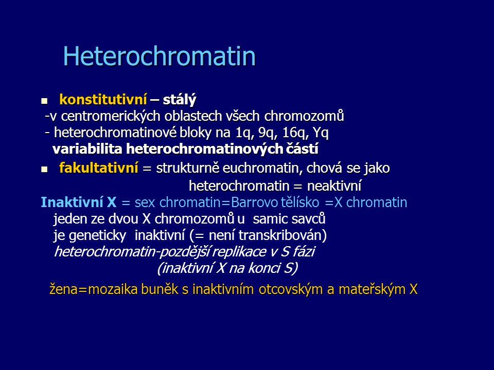 Heterochromatin konstitutivní – stálý konstitutivní – stálý -v centromerických oblastech všech chromozomů -v centromerických oblastech všech chromozom